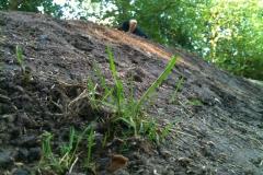 06.2012 Pumptrack Bau